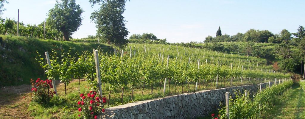 vineyard_ca_coato4